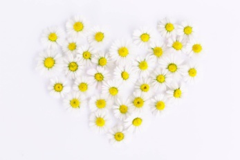 white-and-yellow-flowers-in-heart-form-159077